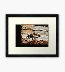 Insect and Table Framed Print