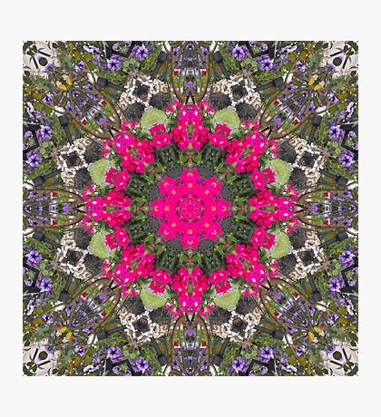 Pirates of the Pansies Fractured Photographic Print