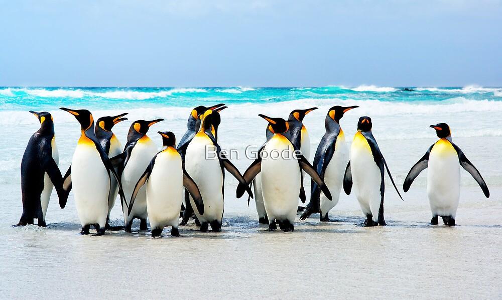 King Penguins by Ben Goode