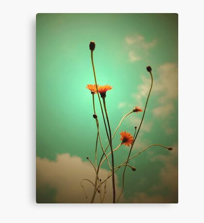 Vintage Weeds Canvas Print
