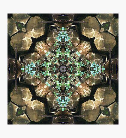 Silent Ivy Photographic Print