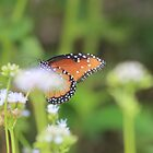 Butterfly Resting on a Flower by Catherine Kerr
