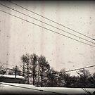 Winter in Hirafu  by scottsphotos
