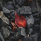Autumn leaf between stones by root-couture