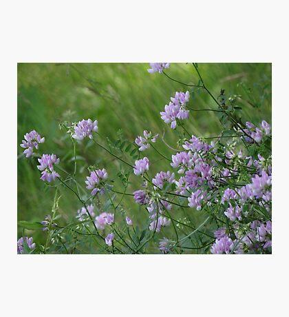 Feld voller Blumen Fotodruck