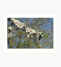 spring blooming. Art Print