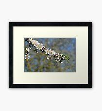 spring blooming. Framed Print