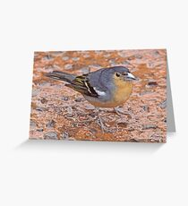 Dig the eyebrows! Greeting Card