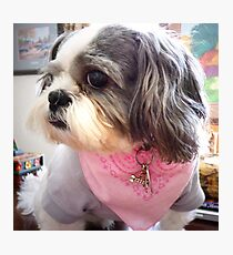 """""""My Pink Neck Scarf"""" Photographic Print"""