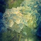 Summer Beauty by Sharon A. Henson