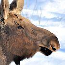 Moose Sweet Moose. by spiffyriki