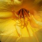 Paint Spring Yellow by Celeste Thinks