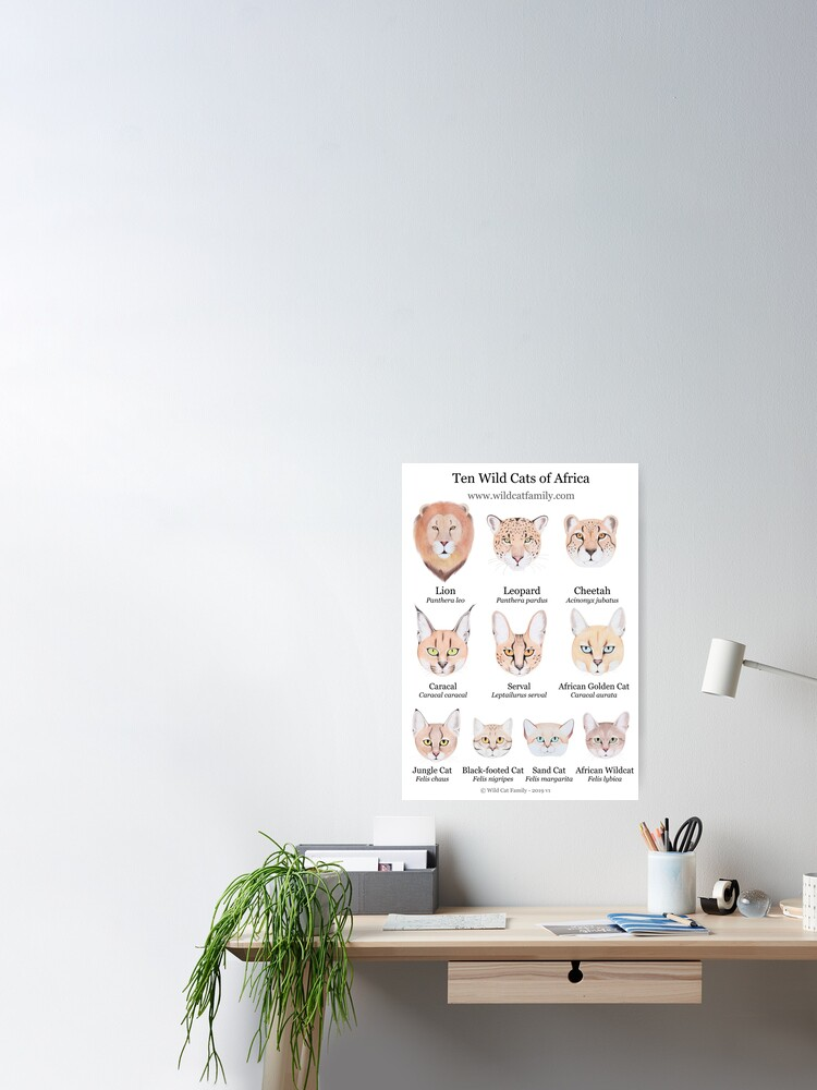 Alternate view of Ten Wild Cats of Africa Chart Poster