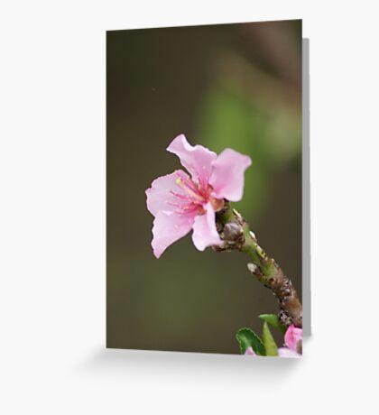 James 4:10; Peach Tree Blooms, La Mirada, CA USA Greeting Card