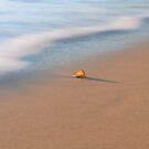 Beach shell by Apatche Revealed