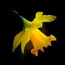 Dreams of Spring by Rodney55