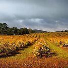 Autumn Vineyard by Ben Goode