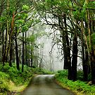 Foggy Forest Road by Ben Goode