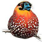 Temminck's Tragopan full colour by Vicky Pratt
