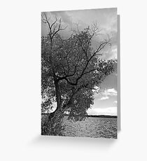 SKELETON TREE Greeting Card