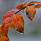 Red Leaves of Winter by Ostar-Digital