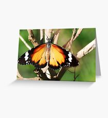 The Monarch's Wing Display ............ Greeting Card