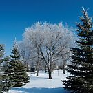 snowy view by Cheryl Dunning