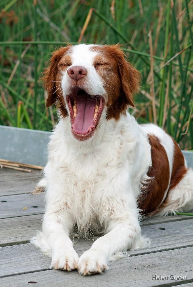 Yawn by Helen Green