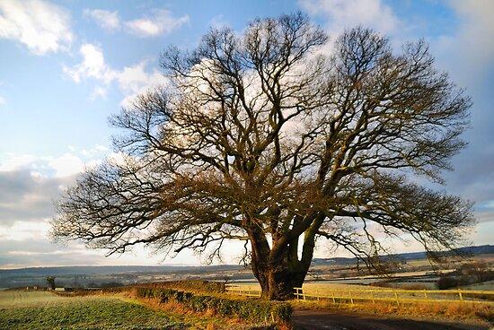 The Dryton Oak by Simon Pattinson