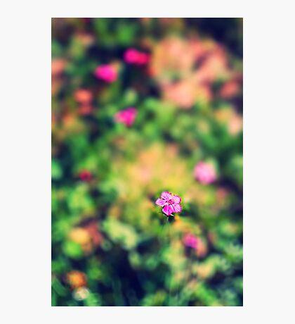 Little pink flower Photographic Print