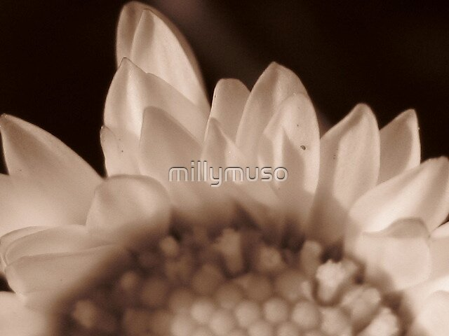translucency by millymuso