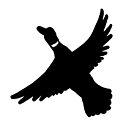 Flying Duck Black Silhouette by WildernessStore