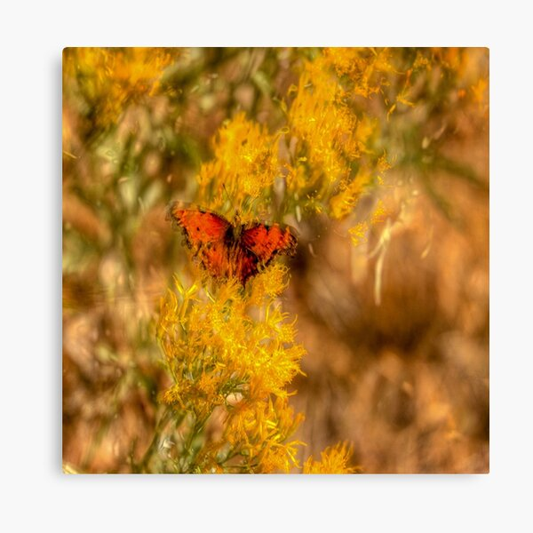 Artsy Butterfly Canvas Print