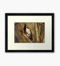 A Tiny Bird Amidst the Branches Framed Print