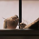 Nesting by Richard G Witham