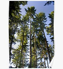 Tall Trees in the Green Wood Poster