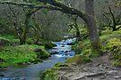Tangles of Burrator Woods: Dartmor, Devon, UK. by DonDavisUK