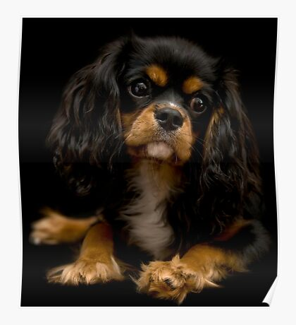 Queen Sophie, King Charles Poster