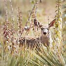 Fawn in the Yucca by Kim Barton
