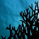 Mood of the Deep by Reef Ecoimages