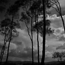 Whispering Trees - Coomba Park NSW by Dilshara Hill