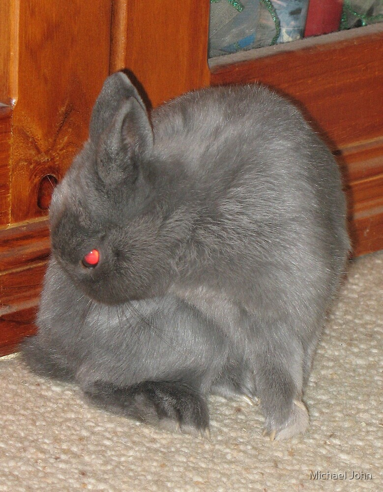 Mad Red-Eyed Rabbit by Michael John