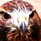 Andi- The Golden Eagle by shutterbug2010