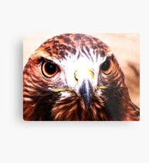 Andi- The Golden Eagle Metal Print