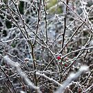 Frosted Nature by Vicki Spindler (VHS Photography)