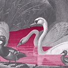 ANIMALS Swans in the water, vintage swan by Mauswohn