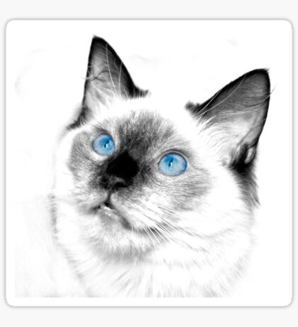 Blue Eyes Sticker