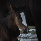 Baby Note's Close Up by Sandy Shiner-Swanson