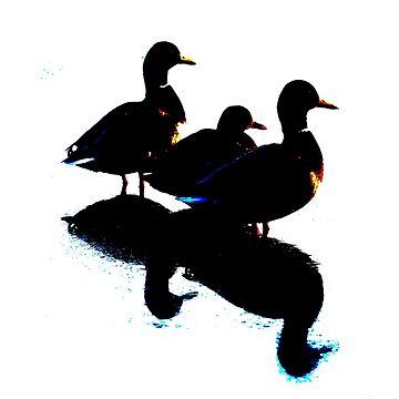 Ducks in a row by derbyshireduck
