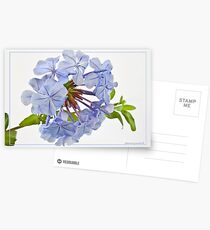 Plumbago Postcards